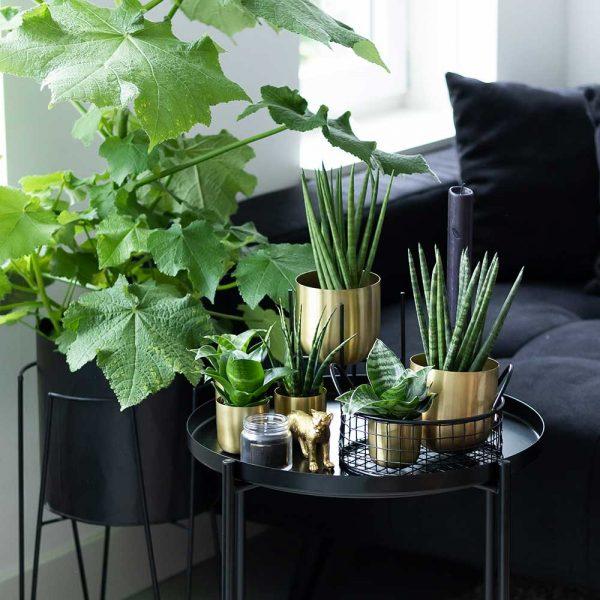 Kolibri Greens sansevieria mix 9cm plantenset planten set2