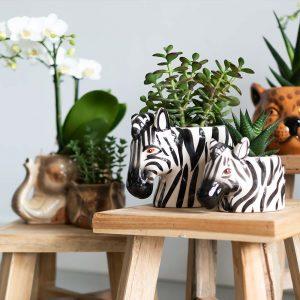 Orchideeën in Wild Animals potten