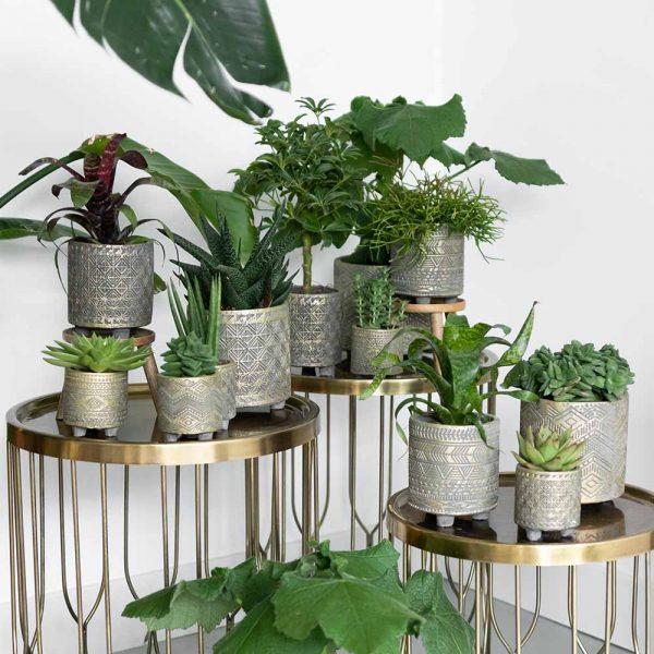 Kolibri Greens succulenten mix 9cm plantenset planten set binti set 1