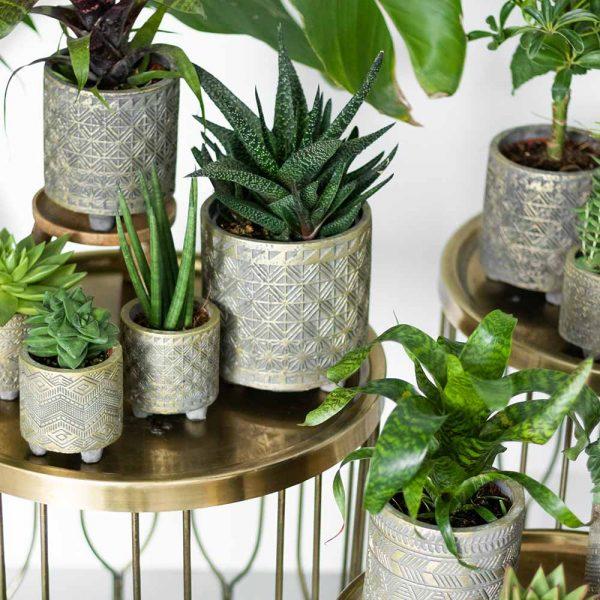 Kolibri Greens succulenten mix 9cm plantenset planten set binti set