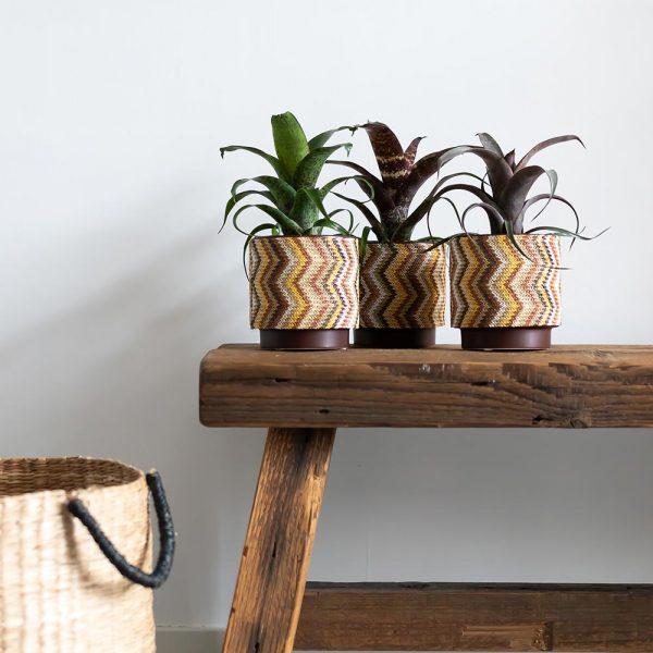 Kolibri Greens vriesea mix 9cm plantenset planten set 1