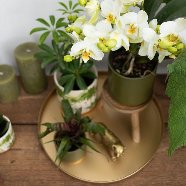 Kolibri Home - dienblad goud ornamental