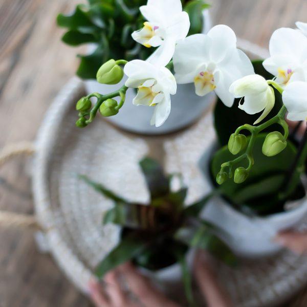 Kolibri Home - bloempot sierpot bohemian white complete planten set all white 1