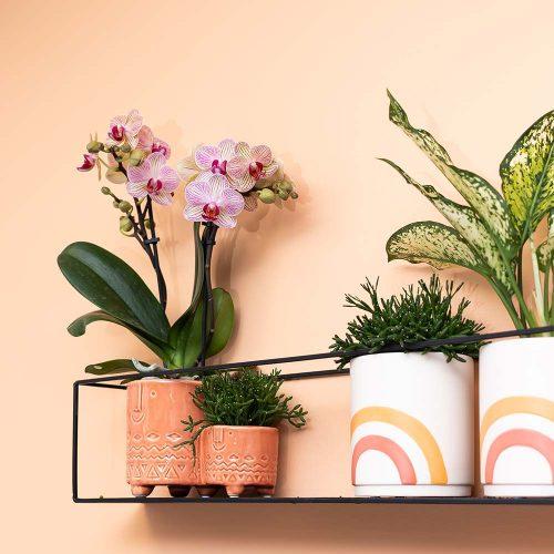 Kolibri Home - bloempot sierpot pot Family twins terracotta rainbow orange 9cm