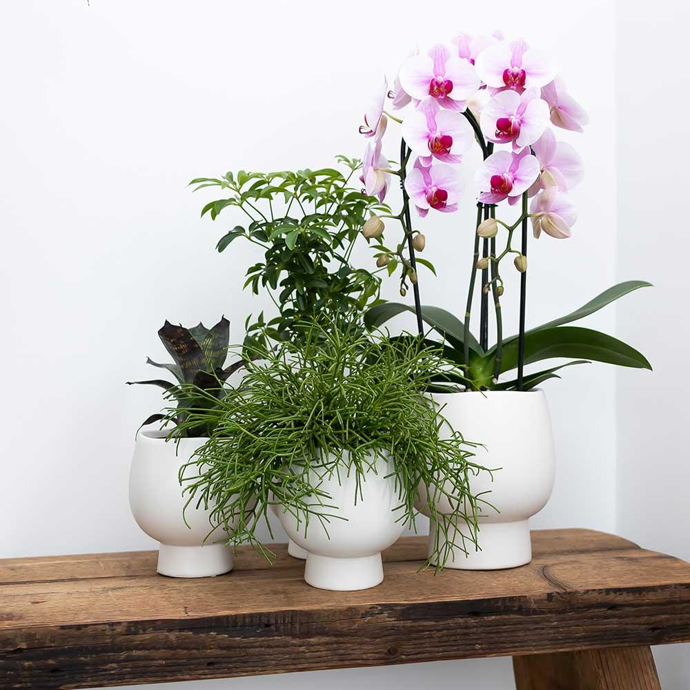 Kolibri Home - bloempot sierpot pot Scandic 12 cm