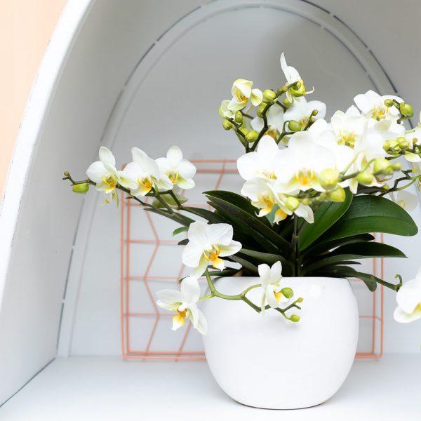 Kolibri Home - bloempot sierpot pot bowl 9cm white