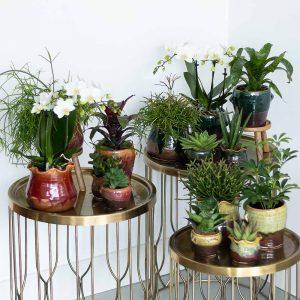 Complete planten set Ethnic