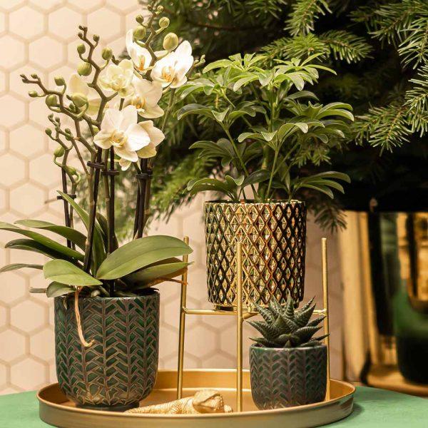 Kolibri Home - bloempot sierpot pot diamond gold 2 9cm