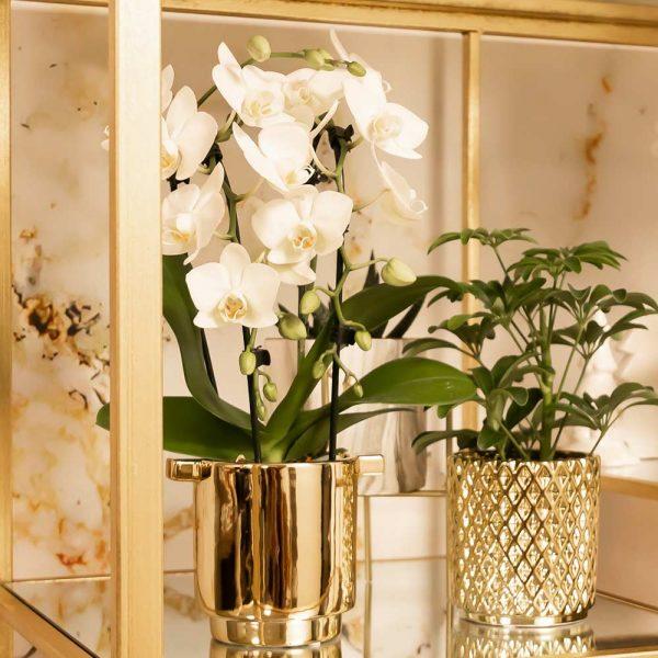 Kolibri Home - bloempot sierpot pot diamond gold 9cm
