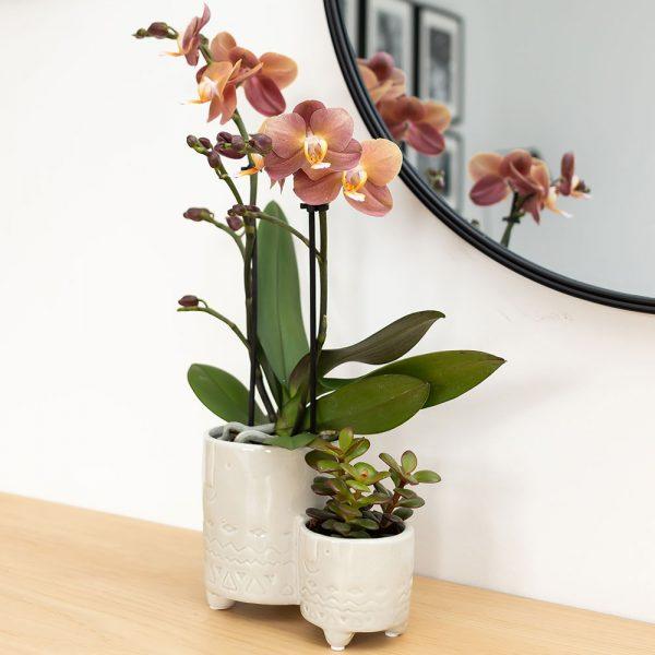 Kolibri Home - bloempot sierpot pot family twins pot