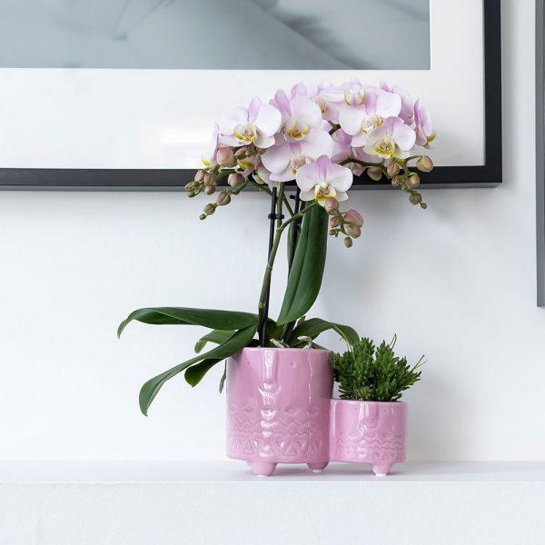 Kolibri Home - bloempot sierpot pot family twins pot pink