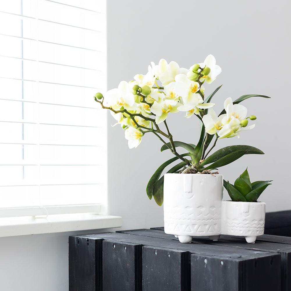 Kolibri Home - bloempot sierpot pot family white
