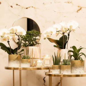 Complete planten set Luxury Living