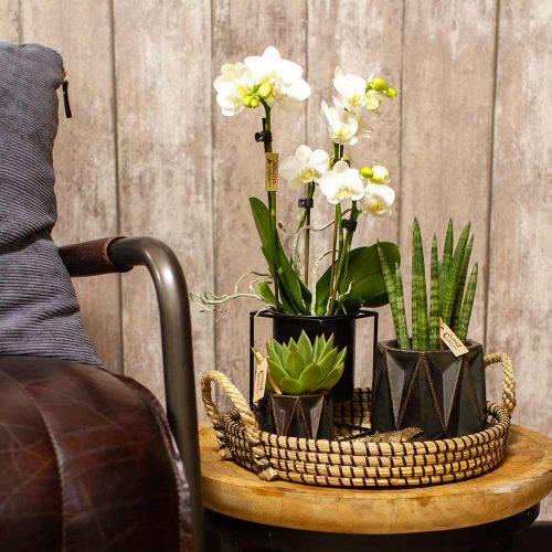 Kolibri Home - bloempot sierpot pot floating black 9cm