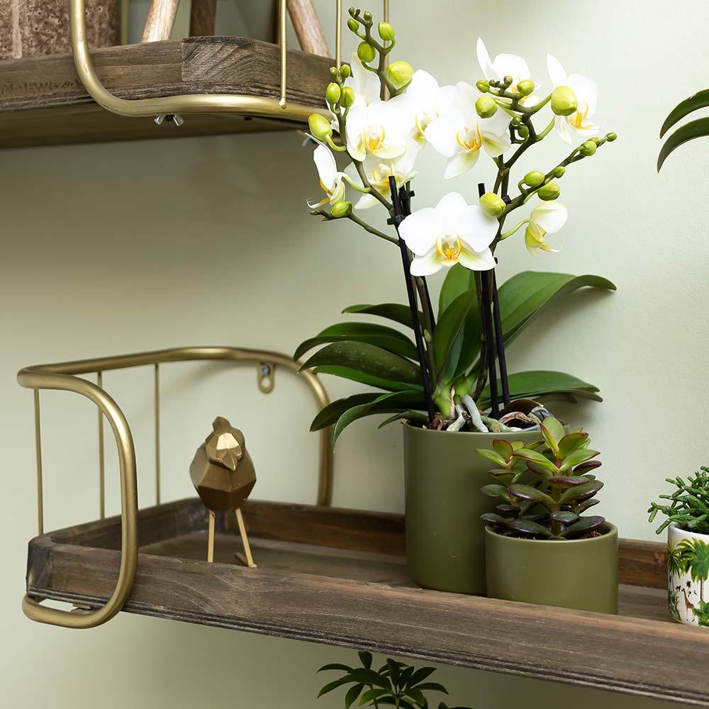 Kolibri Home - bloempot sierpot pot gold foot green 9cm 6cm