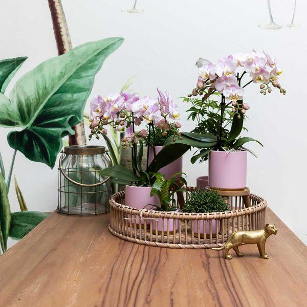 Kolibri Home - bloempot sierpot pot gold foot pink 9cm