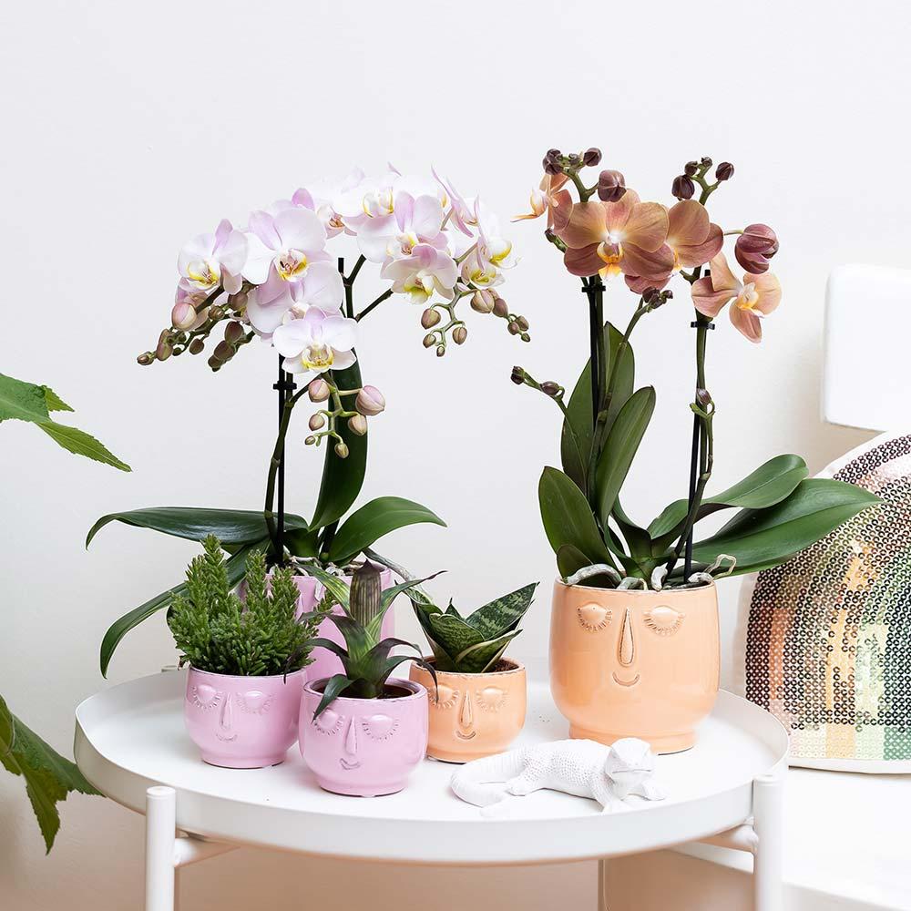 Kolibri Home - bloempot sierpot pot happy face orange pink 9cm 6cm 2