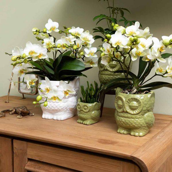 Kolibri Home - bloempot sierpot pot owl pot green white 9cm 12cm