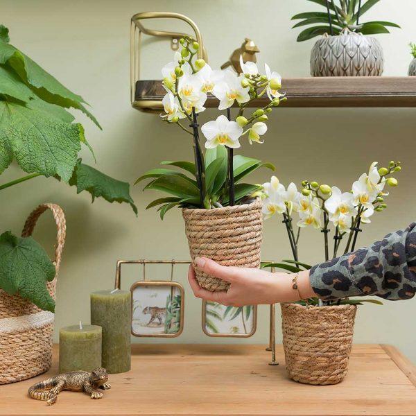 Kolibri Home - bloempot sierpot pot reed basket 9cm 3
