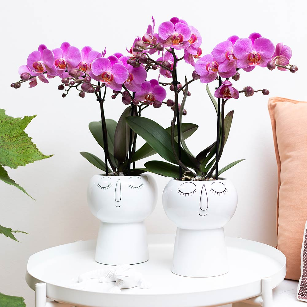 Kolibri Home - bloempot sierpot pot sleep all day 9cm pot
