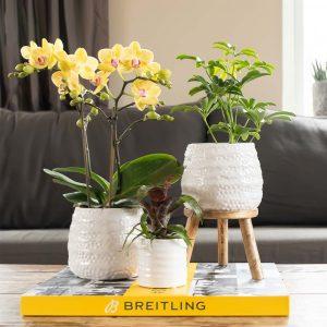 Houten plant verhoging