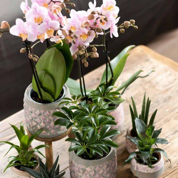 Kolibri Home - houten verhoging voor plant