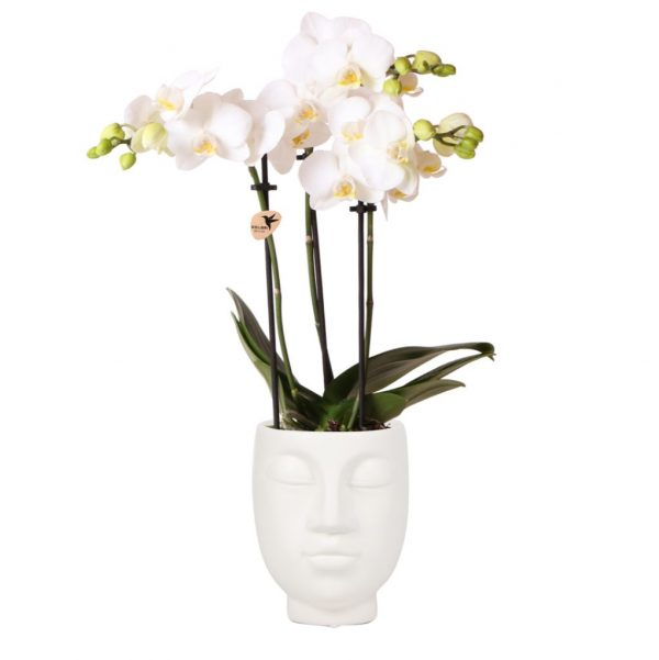 Orchidee in witte face to face pot