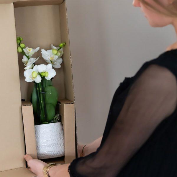 Kolibri company home greens orchids verpakking x1