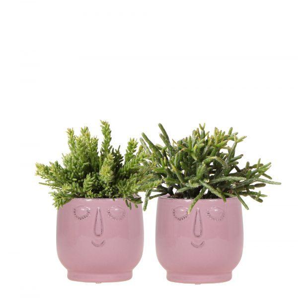 Rhipsalis set in twee Happy Face potten