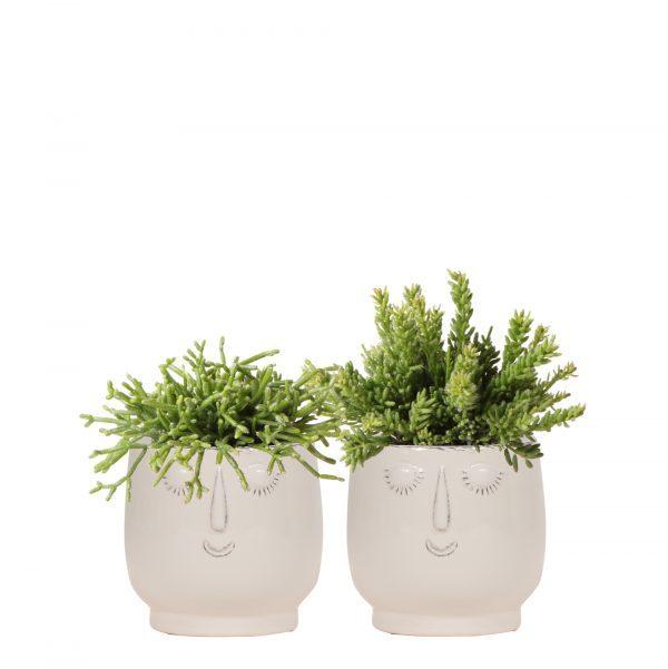 Kolibri greens Rhipsalis planten set in happy face potten wit 9cm