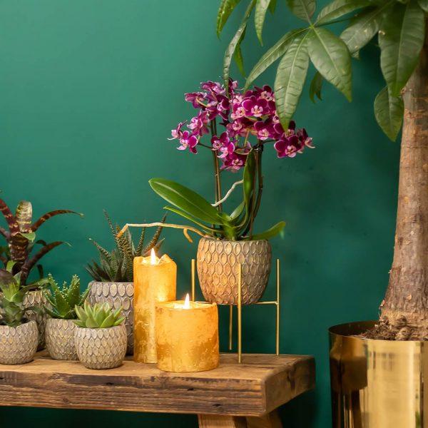 Set van witte orchidee en succulent in grijze Marrakesh pot