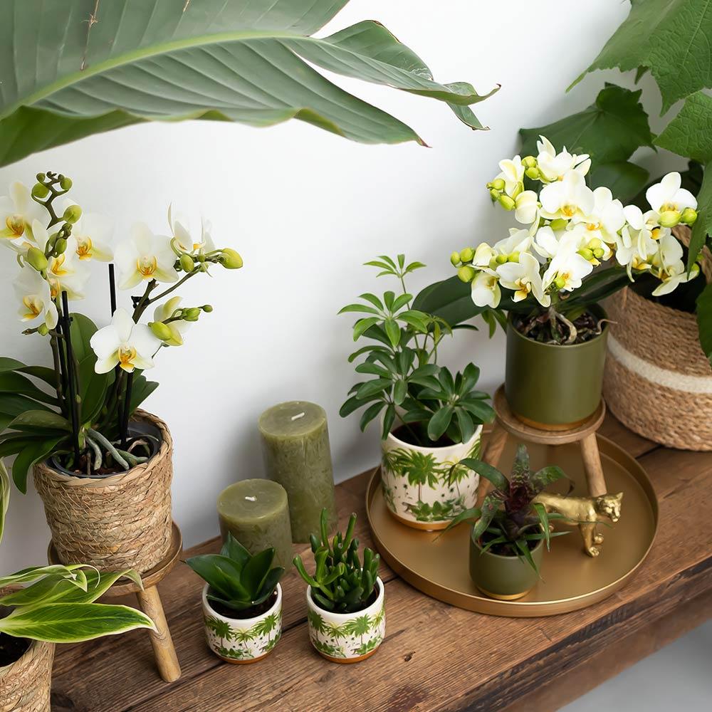 Trend pagina Kolibri Company Into The Jungle stijl