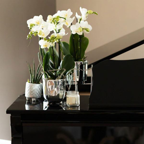 Trend pagina Kolibri Company Luxury Living stijl