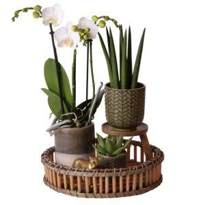 Complete planten set Jungle