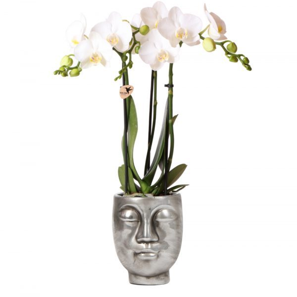 Orchidee in zilveren face to face pot