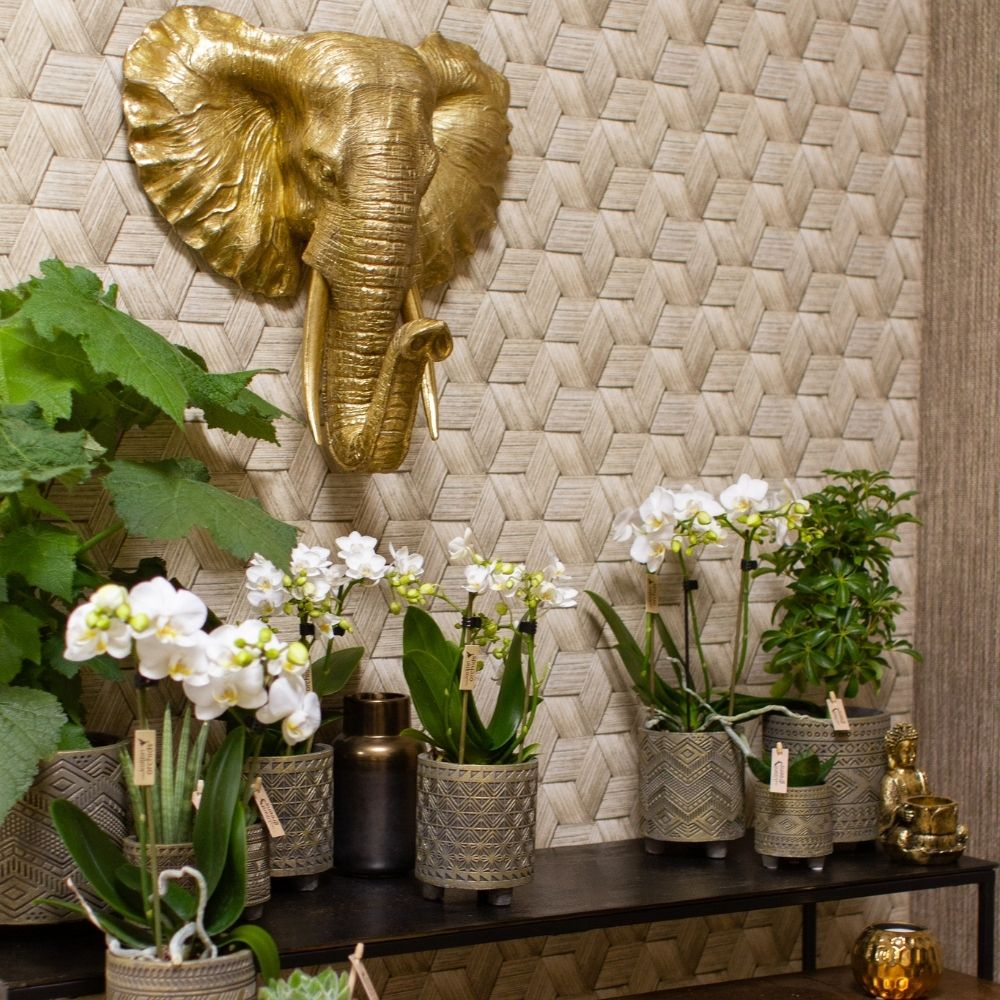 Kolibri Company trend trendpagina Ethnic woonstijl (2)