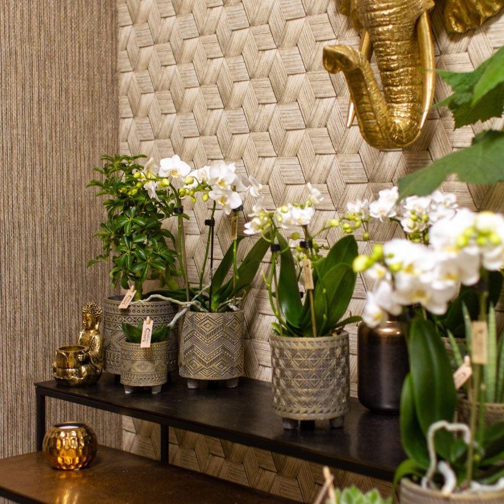 Kolibri Company trend trendpagina Ethnic woonstijl (4)