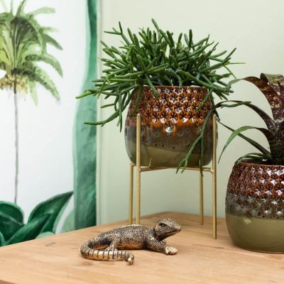 <strong>Ontdek Home accessoires </strong>
