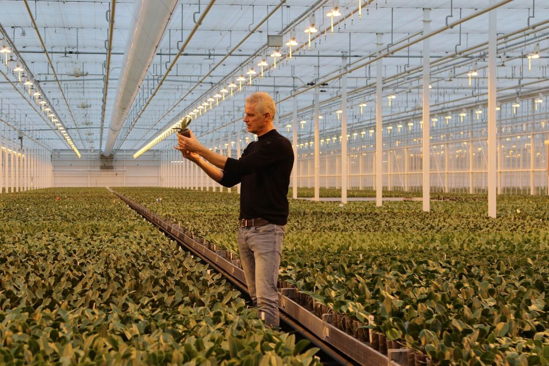 Kolibri Company - verzorgingstips groene planten Hoe verzorg ik mijn planten_