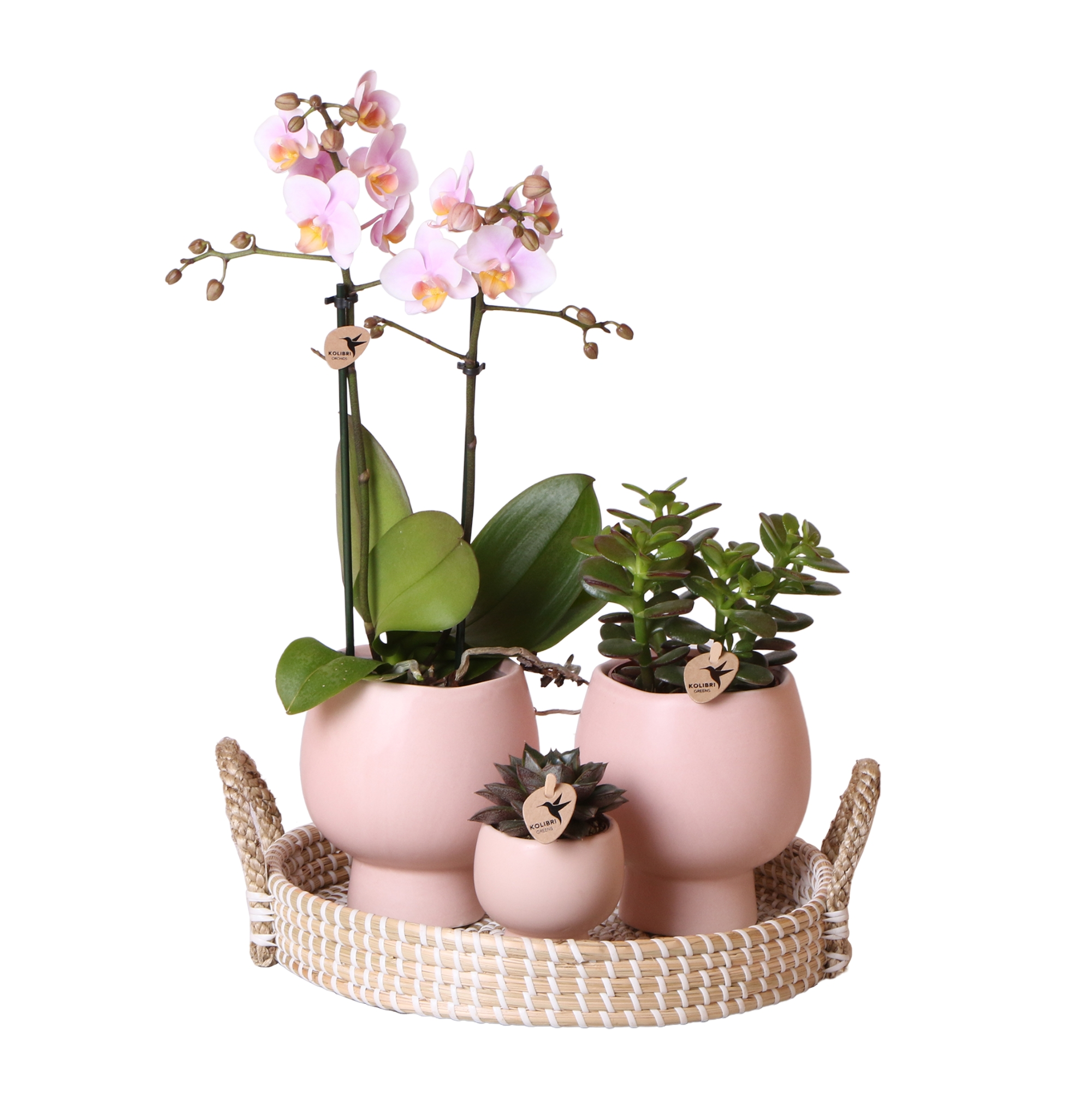 Kolibri Company - Complete planten set Scandic Nude 2 spike