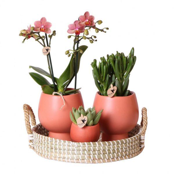 Complete planten set Scandic Terracotta