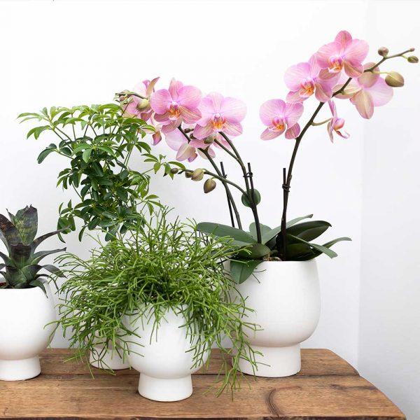 Kolibri Home - bloempot sierpot pot Scandic white pot 12 cm 4