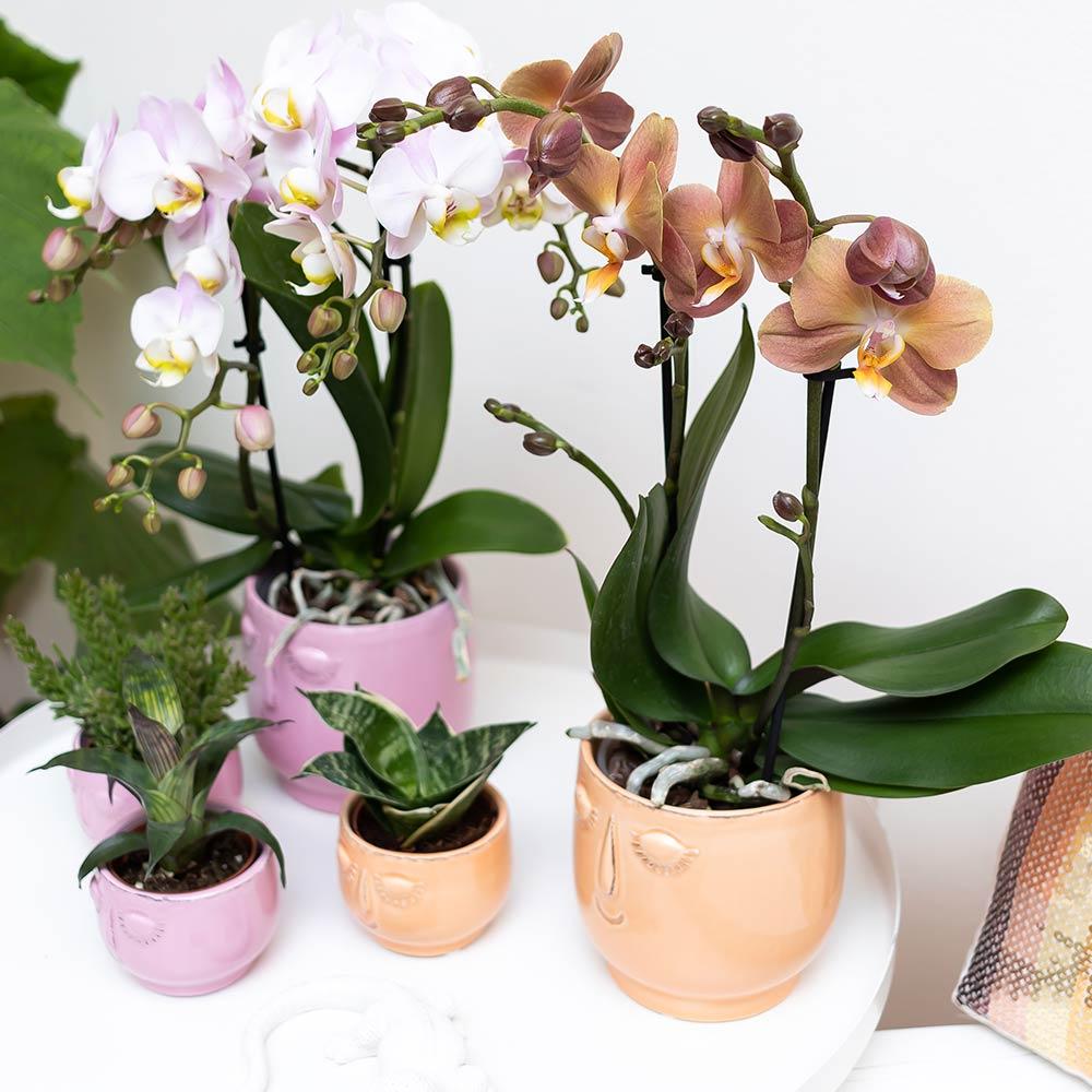 Kolibri Home - bloempot sierpot pot happy face orange pink 9cm 6cm