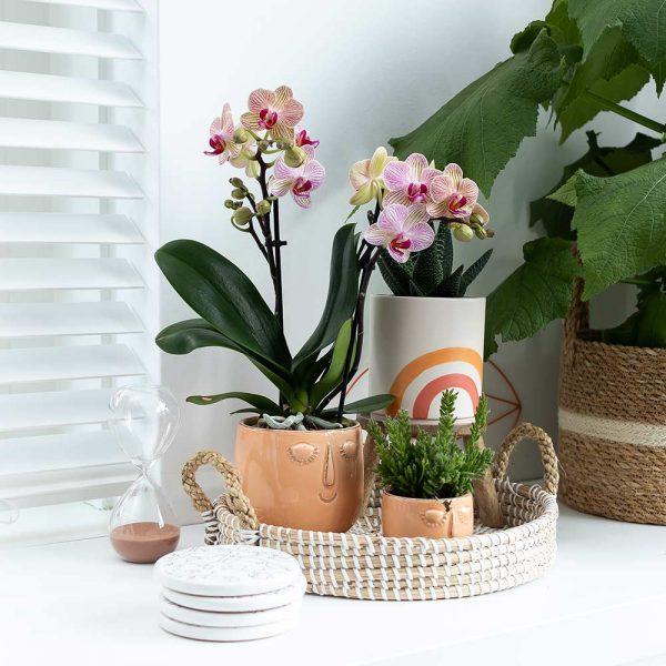 Kolibri Home - bloempot sierpot pot planten set samenstelle