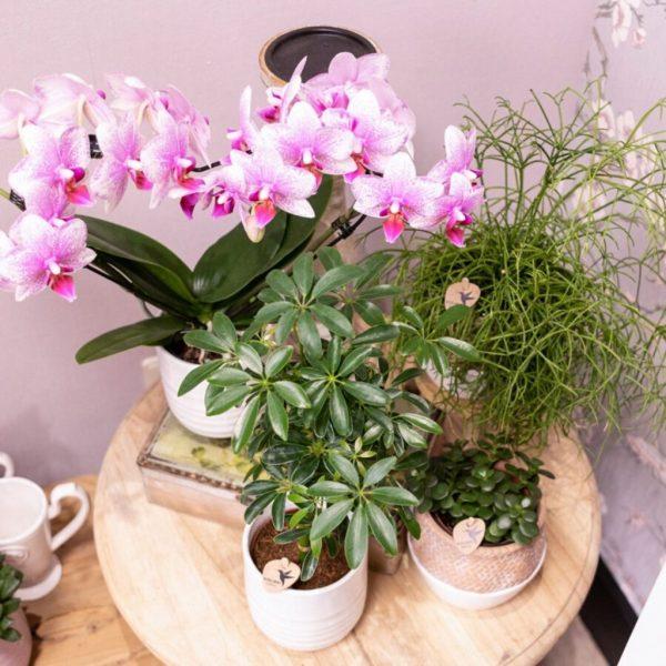 Kolibri Orchids Mineral orchidee Rotterdam - Wavy pot white 9 cm