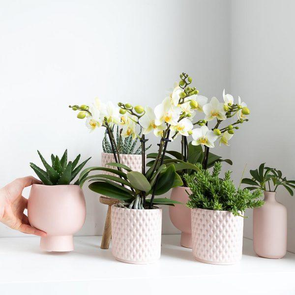 Complete planten set Scandic Nude