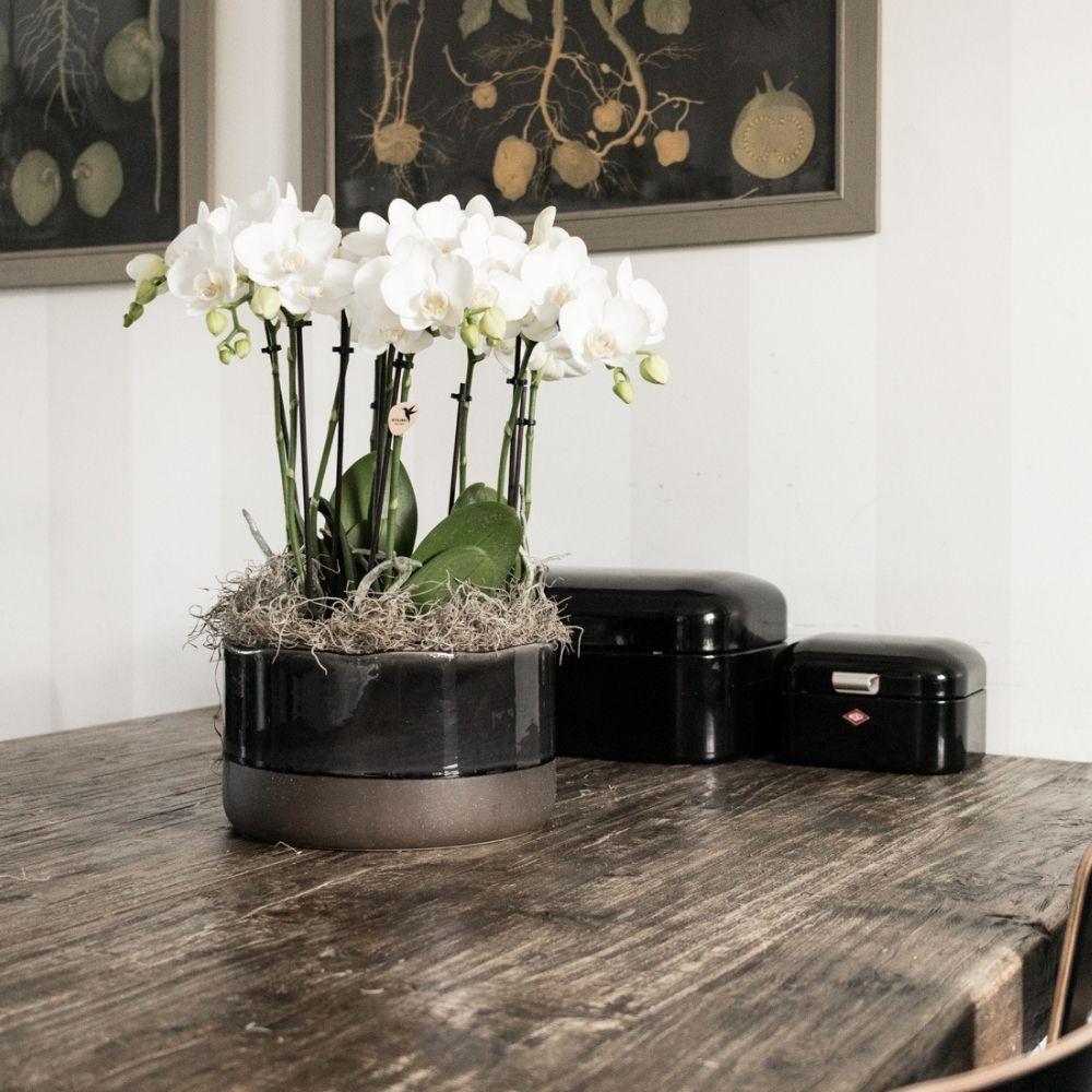 Kolibri Company - Kolibri Orchids phalaenopsis orchidee white in Urban schaal van Kolibri Home
