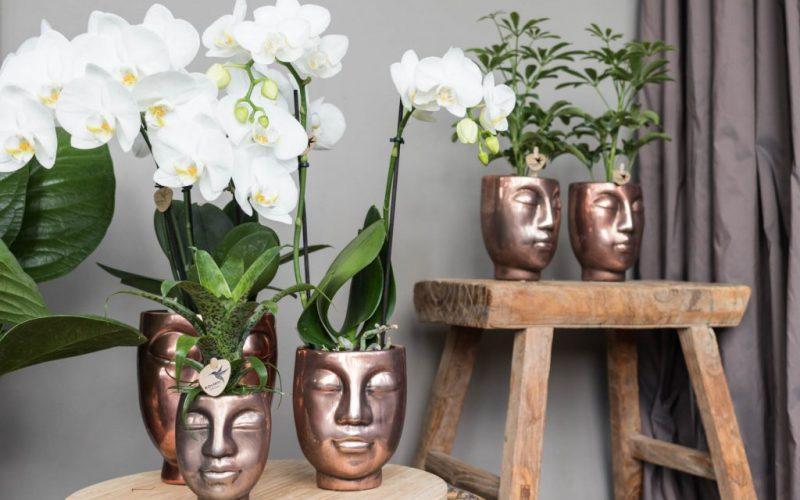 Kolibri Company - Kolibro Orchids Phalaenopsis orchidee in bronze Face-2-face sierpot