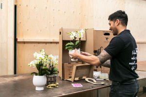Kamerplant verzenden - kolibri Company - orchids (1)