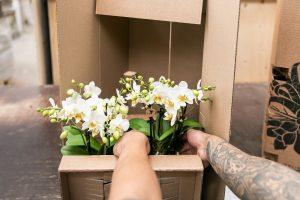 Kamerplant verzenden - kolibri Company - orchids (2)